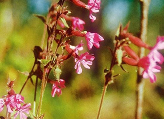 Flora – Farbenfrohe Schönheiten im Norden